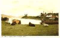 Circa 1930. View of cattle with Castle Moil in the background.